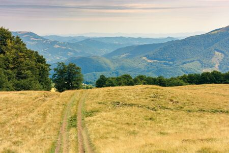 country road through grassy meadow in mountains. nature scenery with beech trees in the distance. sunny late summer landscape with clouds on a blue sky. beautiful carpathian countryside Stock Photo