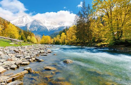 gorgeous day near the forest river in mountains. deciduous tree with vivid yellow foliage among spruce on the curve rocky shore. dreamy composite autumn landscape with distant snowy peaks Stock Photo