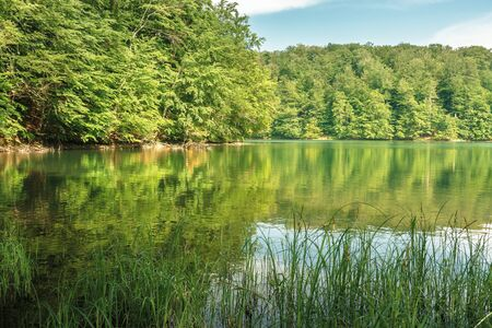 beech forest reflection in the lake. calm nature scenery on a sunny day. great summr vacation. protect green environment concept. location vihorlat mountains, slovakia Stock Photo
