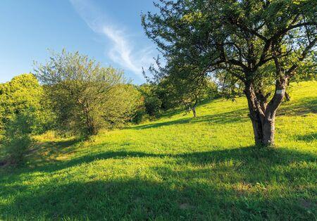 huerto abandonado en la ladera. paisaje rural a la luz del atardecer