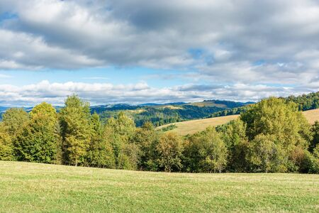 forest on the edge of a meadow in mountains. beautiful scenery of carpathian mountains in early autumn. bright weather with clouds on the sky