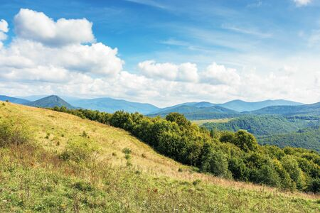 sunny september countryside in mountains. deciduous trees on the grassy meadow. fluffy clouds on a the blue sky