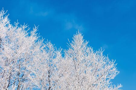 winter scenery with tree in hoarfrost.  bright sunny morning with clear blue sky background Stock Photo