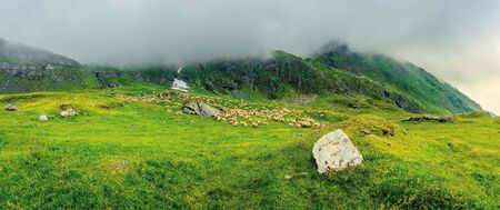 flock of sheep in mountains. bad weather panoramic landscape. rocks among the grass. overcast summer sky. location fagaras ridge, romania Stock Photo