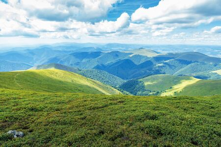 grassy hills and slopes of carpathians.  beautiful summer mountain landscape on a sunny day with clouds on the blue sky. bright afternoon weather