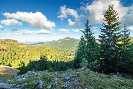 spruce forest on the edge of a hill. stunning landscape of apuseni natural park of romania. sunny afternoon weather in autumn. fluffy clouds on a blue sky. rocks on the slope Stock Photo