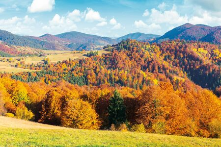 sunny autumn afternoon mountain scenery. trees in fall foliage on the hillside. green grassy meadow. ridge in the distance. bright weather with clouds on the blue sky