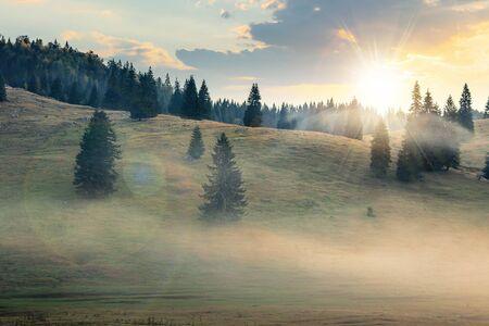 foggy sunrise in romania countryside. spruce trees on hills. beautiful mountain scenery in autumn Stock Photo