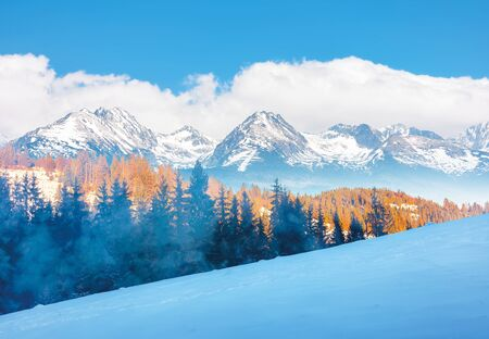 winter scenery in mountains. spruce trees on a snowy hill in evening light. snow capped ridge in the distance. hazy weather and cloudy sky. composite imagery