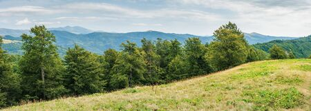 panorama of a beech forest in carpathian mountains. beautiful summer landscape. svydovets range in the distance Stock Photo