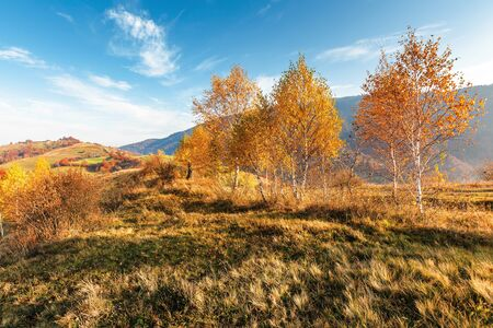 birch trees on the meadow in mountains. beautiful autumn landscape. trees in lush orange foliage. village on the distant hill. wonderful countryside scenery at sunrise. sunny weather Stock Photo