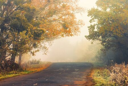 asphalt country road on a misty autumn morning. scenery with trees in colorful fall foliage Stock Photo