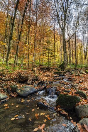 refreshing stream in the autumn forest. beautiful nature scenery. rocks among the brook with shore covered in fallen foliage.