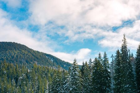 winter scenery in mountains. spruce trees in snow. cloudy sky Stok Fotoğraf