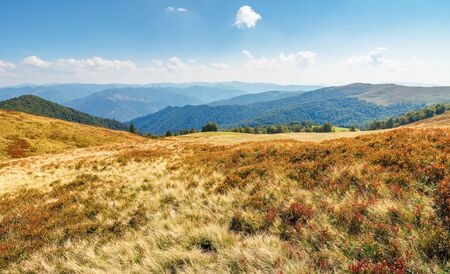 meadows  of the carpathian krasna ridge. wonderful sunny scenery with fluffy clouds on the horizon. mountain range in the distance. 写真素材