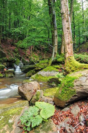 brook among rocks and trees. beautiful nature scenery in the beech forest. wet mossy boulders. lush green foliage on the plants Stock Photo