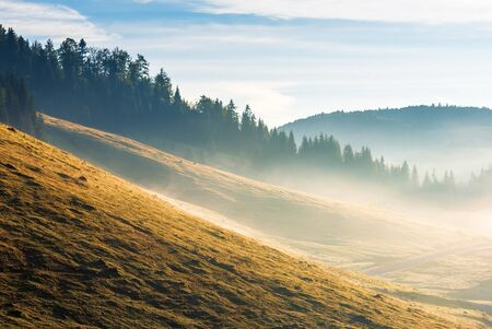 fog rolling down the forested hill at sunrise. beautiful autumn weather with blue sky above the slopes with weathered grass. stunning landscape in mountains
