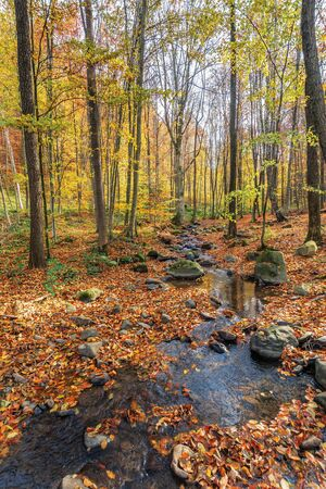 small brook among rock in forest. beautiful autumn nature scenery. trees in colorful foliage on a sunny day in park.