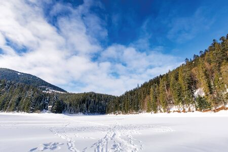 frozen and snow covered lake synevyr. beautiful winter landscape of carpathian mountains. wonderful scenery among spruce forest. popular travel destination of transcarpathia, ukraine Stock Photo - 126763980