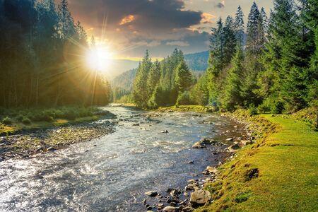 rivière de montagne serpentant à travers la forêt au coucher du soleil en soirée. beaux paysages naturels en automne. épinettes au bord du rivage. magnifique morceau de paysage du parc national de synevyr par beau temps avec des nuages