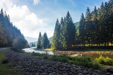 mountain river winding through forest. beautiful nature scenery in autumn. spruce trees by the shore. wonderful piece of synevyr national park landscape in good weather with clouds Stock Photo