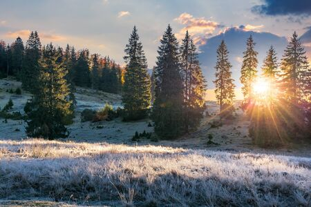 sunrise in the spruce forest. gorgeous nature scenery. weathered grass in hoarfrost and rime on the meadow. Stock Photo