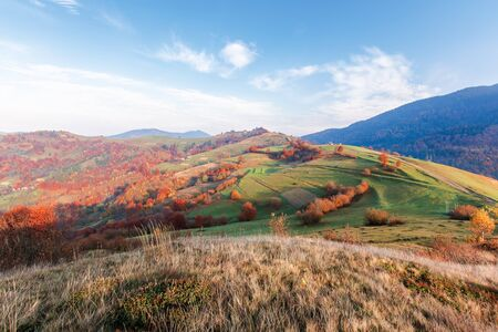calm autumn morning in the mountains. beautiful rural area with fields and orchards on hills. traditional carpatian landscape. trees in colorful foliage, some clouds on a bright blue sky