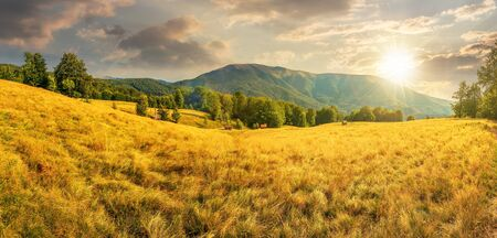 late summer sunset landscape in mountains.  beech trees on the grassy meadow. panorama with  ridge in the distance beneath a sky with clouds in evening light Stock Photo