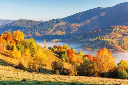 campagne dans les montagnes le matin. pentes rurales herbeuses avec des champs et des arbres au feuillage d'automne. beaux paysages d'automne avec brouillard dans la vallée.
