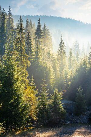 nebliger Sonnenaufgang im Fichtenwald. schöne Naturlandschaft in den Bergen. Sonnenlicht, das in einer dunstigen Atmosphäre leuchtet
