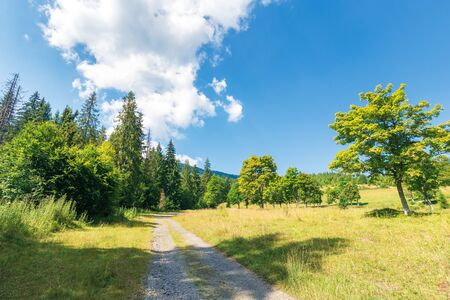 abandoned gravel road through forest. beautiful summer scenery on a sunny day. cloud above the distant mountains. spruce trees along the path