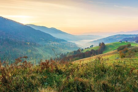 countryside in mountains at dawn. grassy rural slopes with fields and trees in autumn. ridge rolling in to horizon. village down in the valley full of fog. high clouds glowing in reddish light Stock Photo