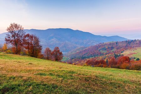 countryside in mountains at sunrise. grassy rural slopes with fields and trees in fall foliage in autumn. magnificent mountain in the hazy distance. high clouds on the azure sky