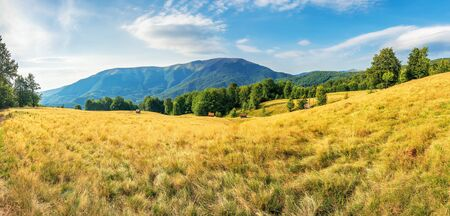 beautiful late summer landscape in mountains. panorama with beech trees on the grassy meadow. ridge in the distance beneath a sky with clouds