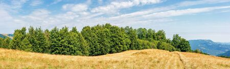 carpathian countryside in late summer. beech forest on the edge of a hill. blue sky with beautiful cloudscape on a sunny september afternoon. panoramic view. path through grassy meadow