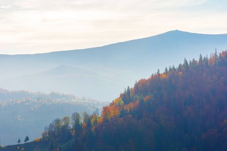 beautiful autumn afternoon in mountains. hazy atmosphere and clouds on the sky. trees in fall foliage. wonderful countryside scenery