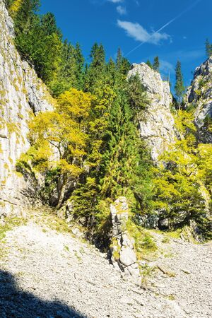trees on steep rocky slope. beautiful nature scenery on a sunny day. canyon of Cetatile Ponorului cave sculpted by river located in apuseni natural park, romania. clouds on the blue sky in autumn Stock Photo