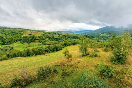 beautiful countryside on an overcast day. carpathian rural district in mountains. overcast rainy september sky. birch trees on  hill near agricultural fields on the slope. village in the valley