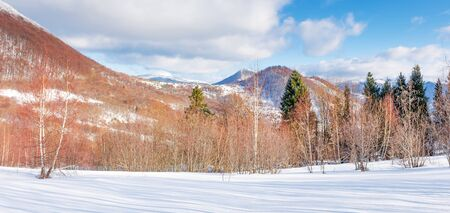 beautiful winter panorama in mountains at sunset. leafless birch trees on snow covered meadow in evening light. ridge with snow caped peaks in the distance. wonderful landscape in cold weather