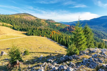 beautiful sunrise landscape in apuseni mountains. coniferous forest on the distant hills and grassy meadow in morning light. fluffy clouds on a vivid blue sky above the ridge in autumn Stock Photo