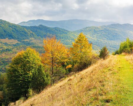 sunny weather after the storm in mountains. beech trees on the slope of a hill in colorful foliage in early october. ridge in the distance beneath a cloudy sky