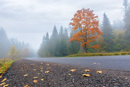 new asphalt road through forest in fog. mysterious autumn scenery in the morning. trees in vivid orange foliage, some leaves on the ground. gloomy overcast weather.