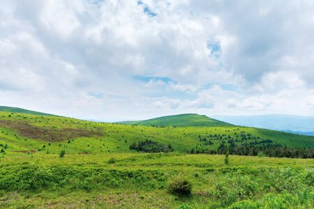 beautiful summer scenery on a cloudy day. trees near the distant summit. green grassy rolling hills of runa mountain, transcarpathia, ua Stock Photo