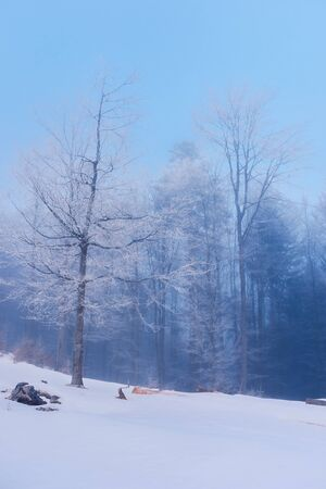 beautiful winter scenery in forest. trees in hoarfrost on a snow covered hill. blue gloomy dawn background. Stock Photo