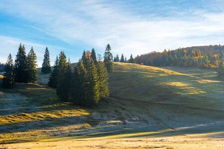 spruce trees on the hill at sunrise. beautiful autumn nature scenery of apuseni natural park. hazy weather with bright blue sky and clouds. grass in melting hoarfrost Stock Photo - 127958633