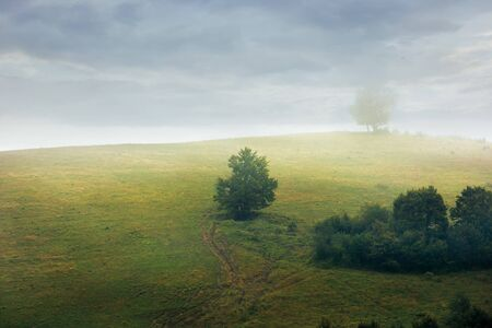 trees on the hill in fog. gloomy weather with overcast sky. green grass on the meadow. countryside at dawn in early autumn Stock Photo
