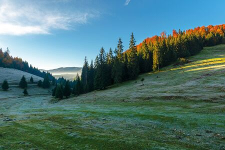 wonderful autumn landscape of apuseni, romania. coniferous forest on the grassy hill. ridge in the distance. sunny weather with clouds on the blue sky. glowing fog in the distant valley