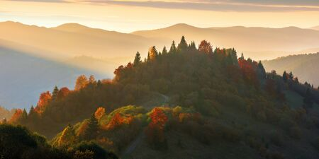 beautiful autumn sunset in mountains. trees on the hill in fall foliage. distant ridge in sunlight. beautiful countryside panorama on a warm october evening