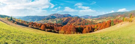 beautiful panoramic landscape in october. meadow in weathered grass trees in fall foliage. mountain range in the distance beneath a blue sky with fluffy clouds