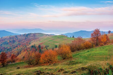rural area in mountains at dawn. beautiful countryside autumn scenery. trees on rolling hills in fall foliage. clouds above the distant ridge an foggy valley. gorgeous purple sky